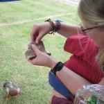 Enten füttern am Morgen vom Camper aus