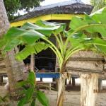 Unser Beach-Fale auf Savai'i