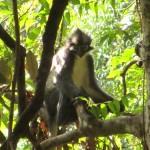 Hausbesetzeraffe…auch Punker-Affe genannt
