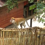 hungriger Besucher in Bukit