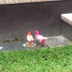 bunte Huehnchen in Ubud