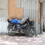 überall wird gern geschlafen…