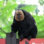 Zoo Singapore – Einer von Vielen