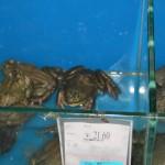 Diese Kröte kann man für 21,60 Y schlucken