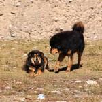 Sie haben sich lieb…auf dem Weg zum Namtso Lake