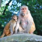 Na ihr Affen