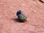 Swaziland – Kleine Wanderung  Voll Scheiß